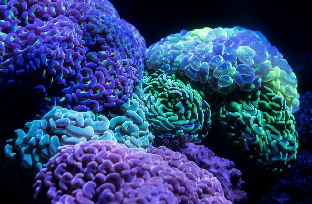 purple and green coral reefs