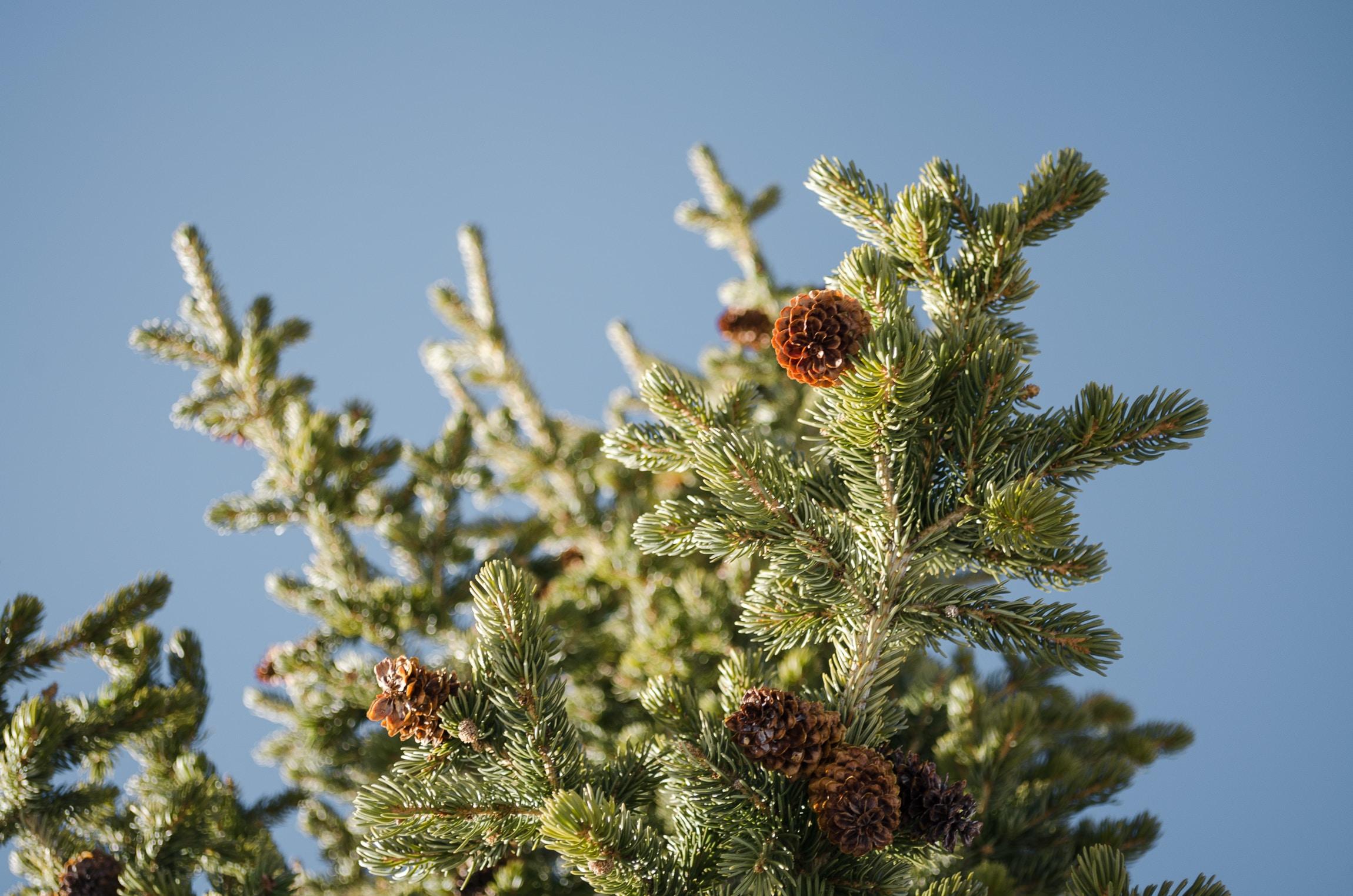 closeup photo of brown petaled flowers