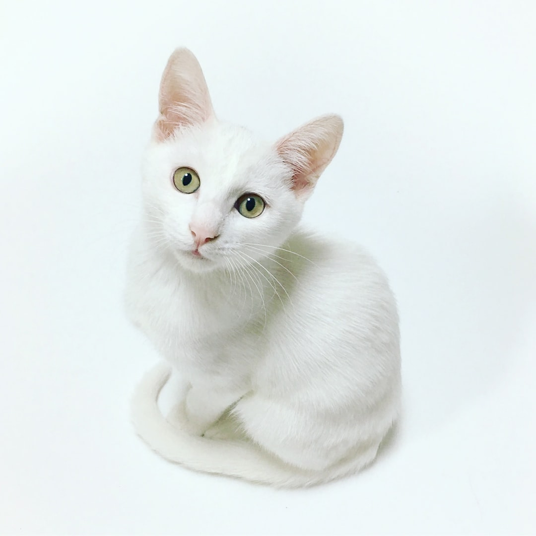 We adopted our white cat, Neige, in September 2017, when she was only two months old. One day, while setting up our studio, she decided to go right in the middle of it, stood up, and looked right at us, as if she wanted someone to take her photo. So, we did.