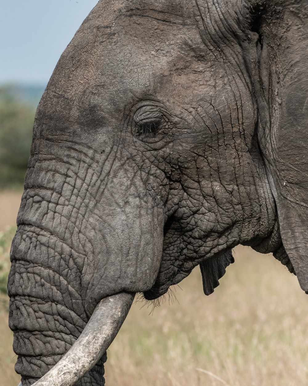 shallow focus photography of elephant