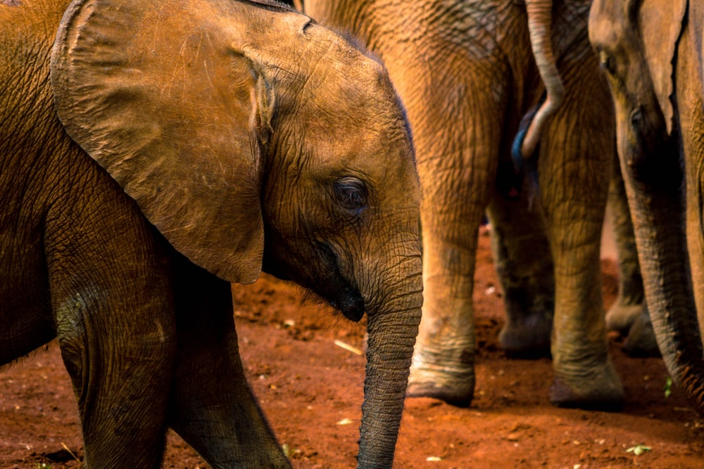 closeup photography of elephant