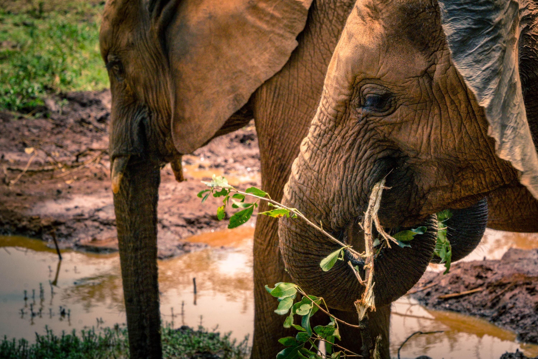 gray elephants eating green plants