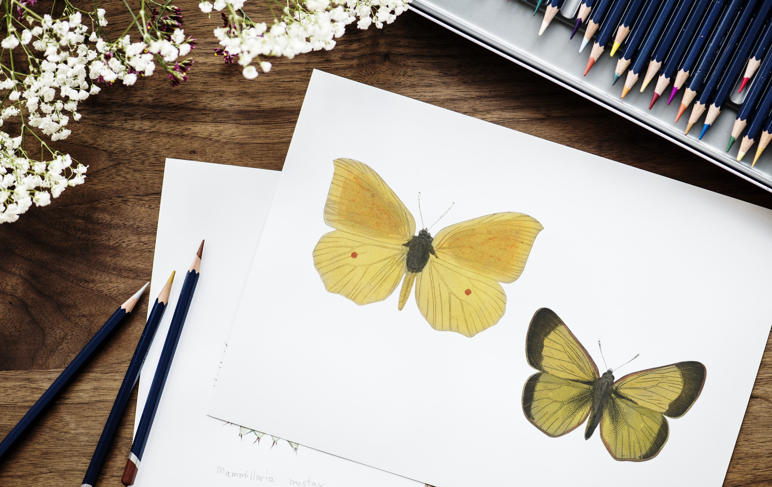 two yellow butterflies illustration