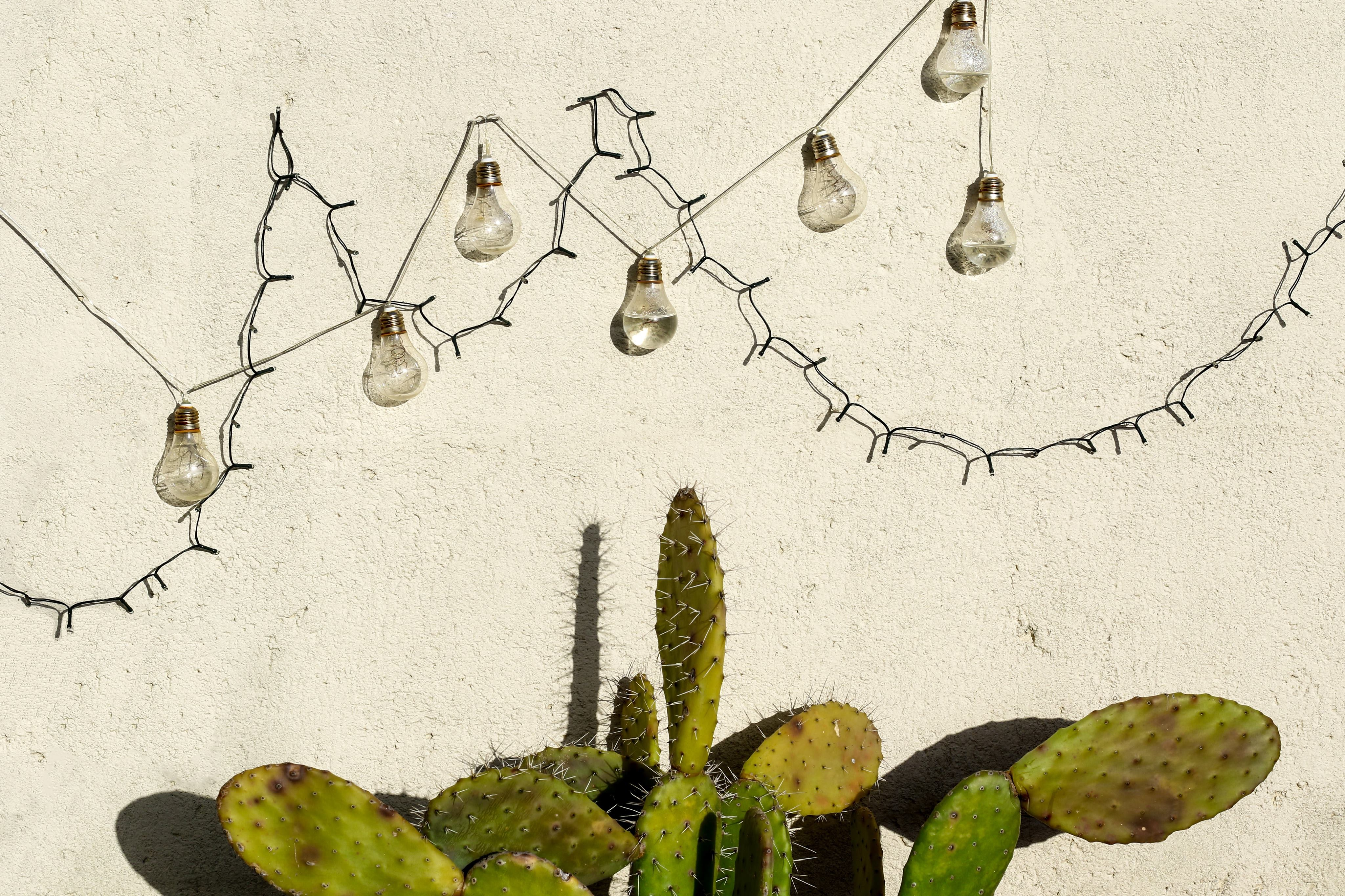 light bulbs hanging on top of cactus