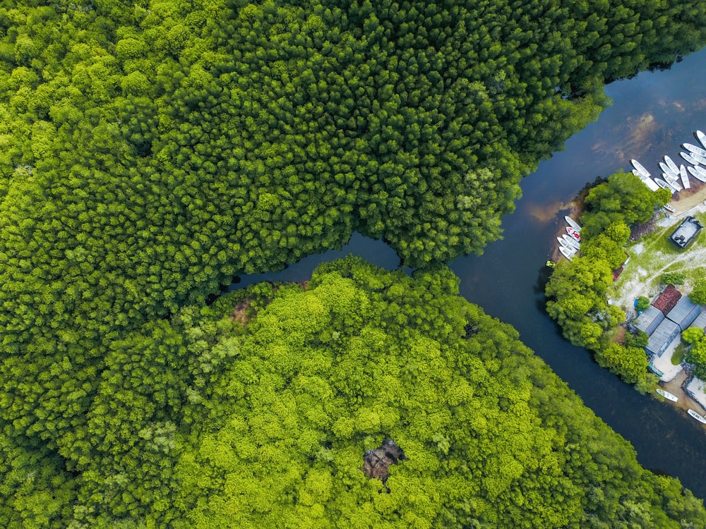 aerial shot of body of water surrounded by trees
