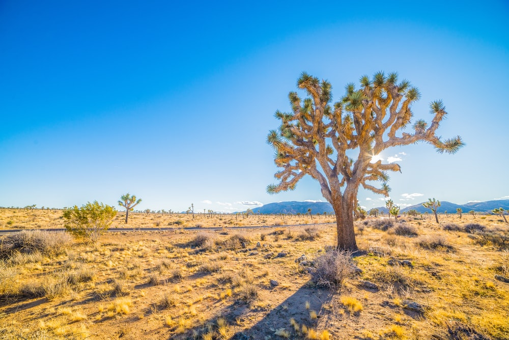 landscape photo of savanna