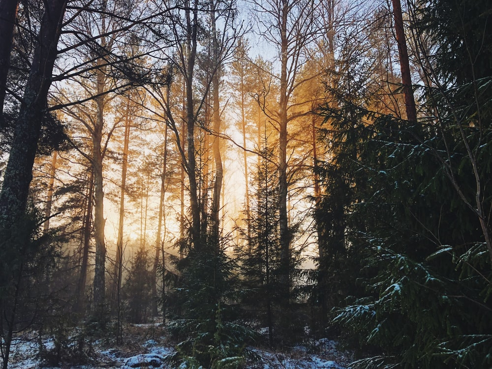 landscape photography of woods