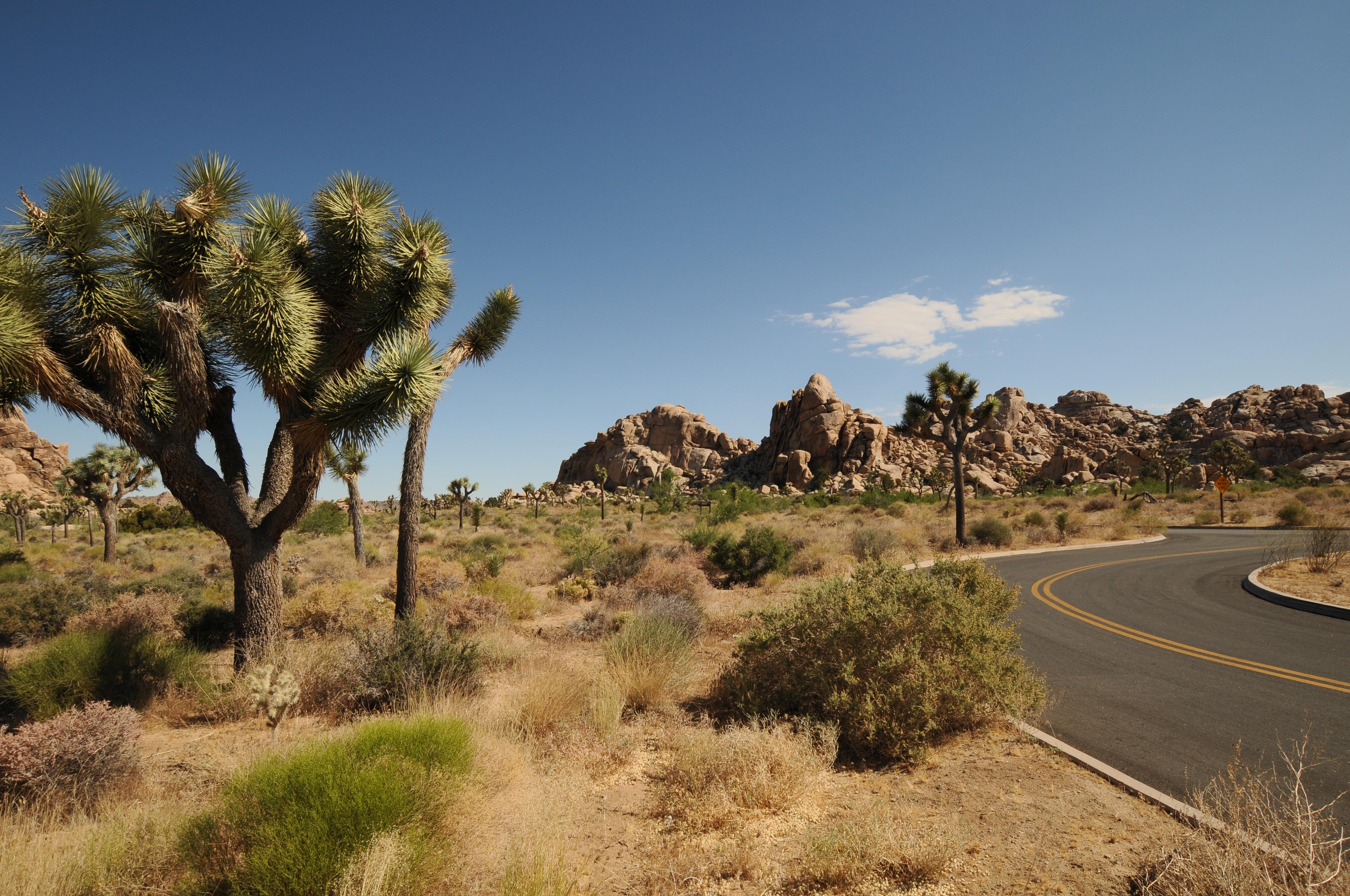 empty road near tree