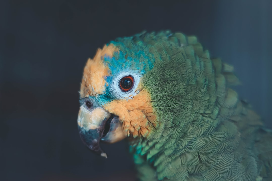 the animal's eyes