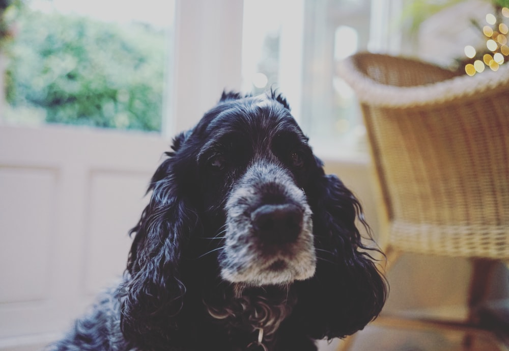 black and white dog near wicker armchair