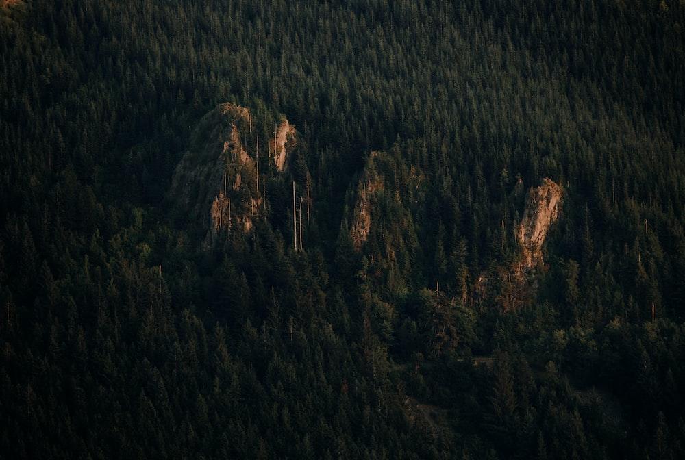 bird's-eye view of trees