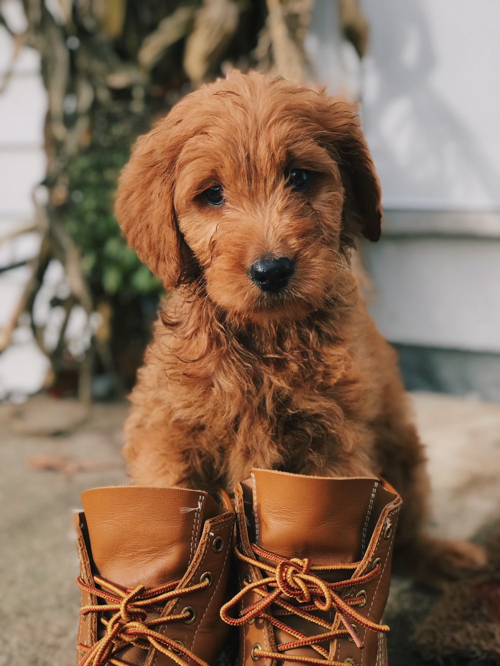 puppy standing in front of boots