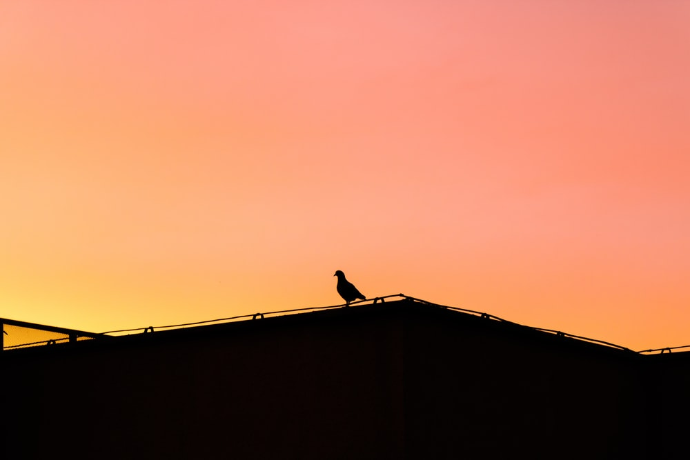 silhouette photo of bird perching on roof during golden hour