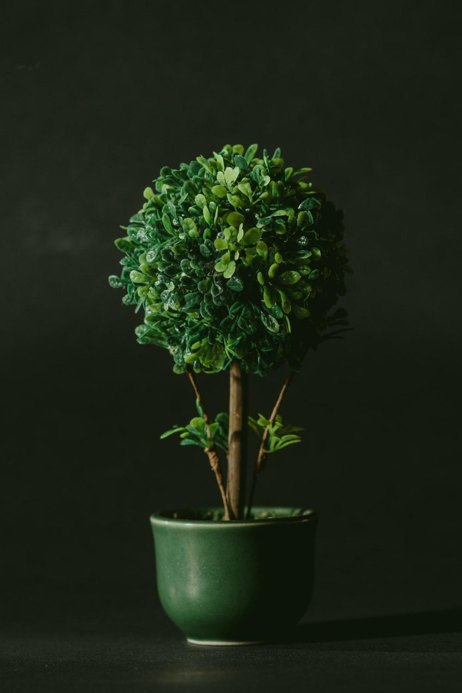 green leafed bonsai tree against black background