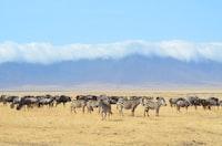 zebra on desert