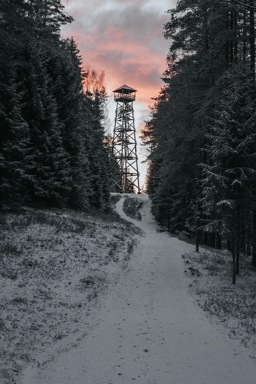 tower between trees