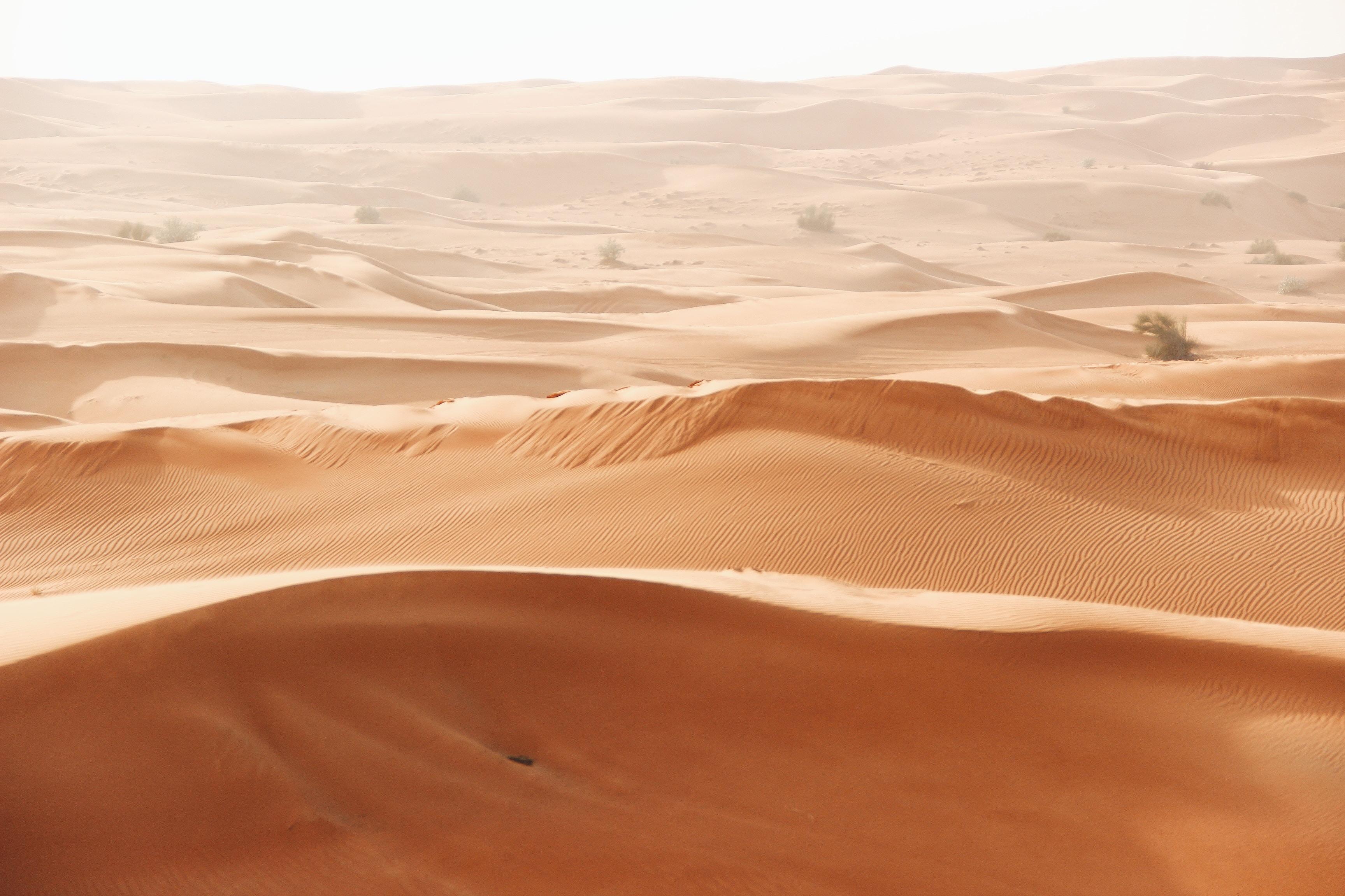 brown desert field