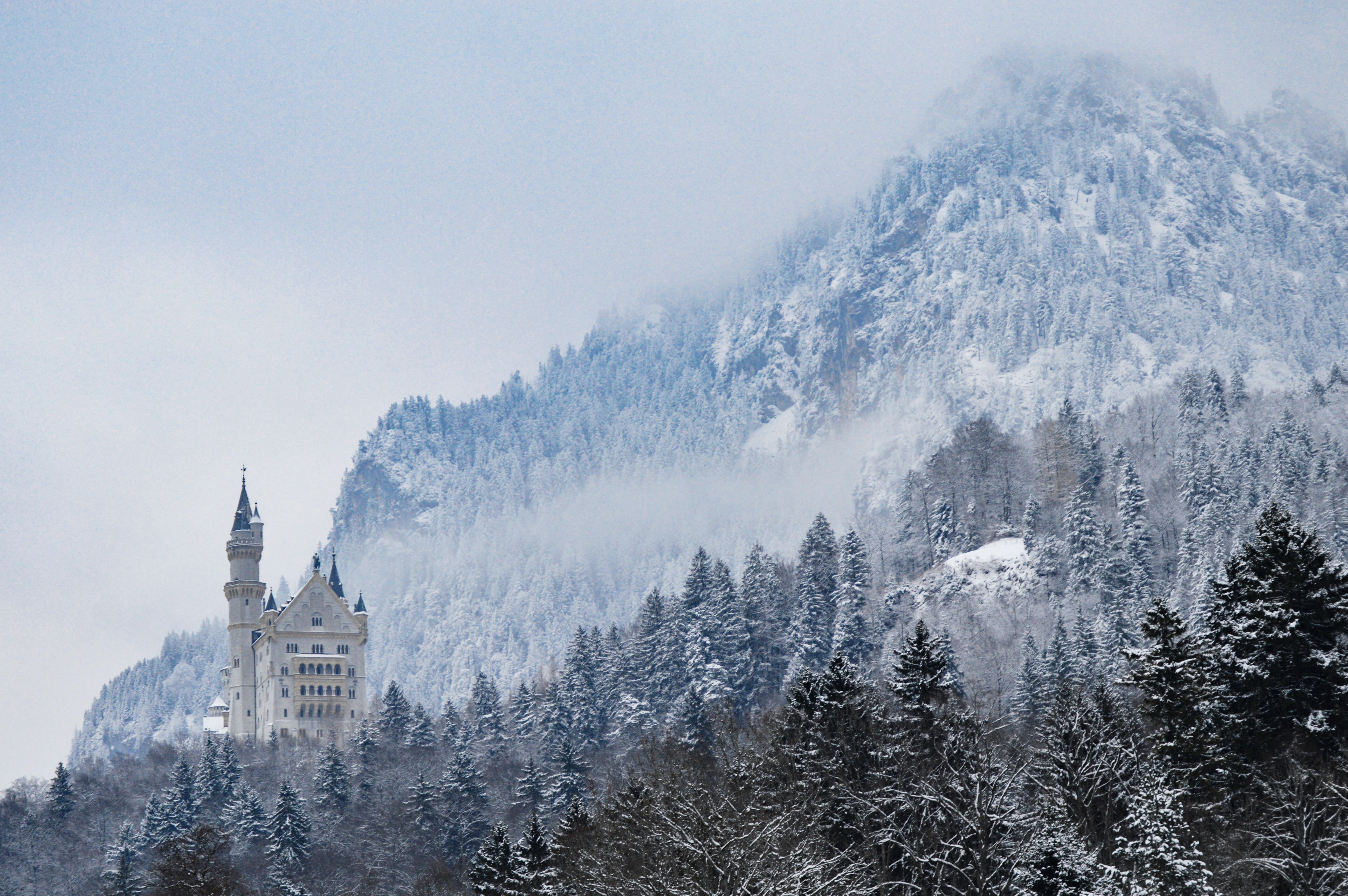 gray castle in the middle of forest