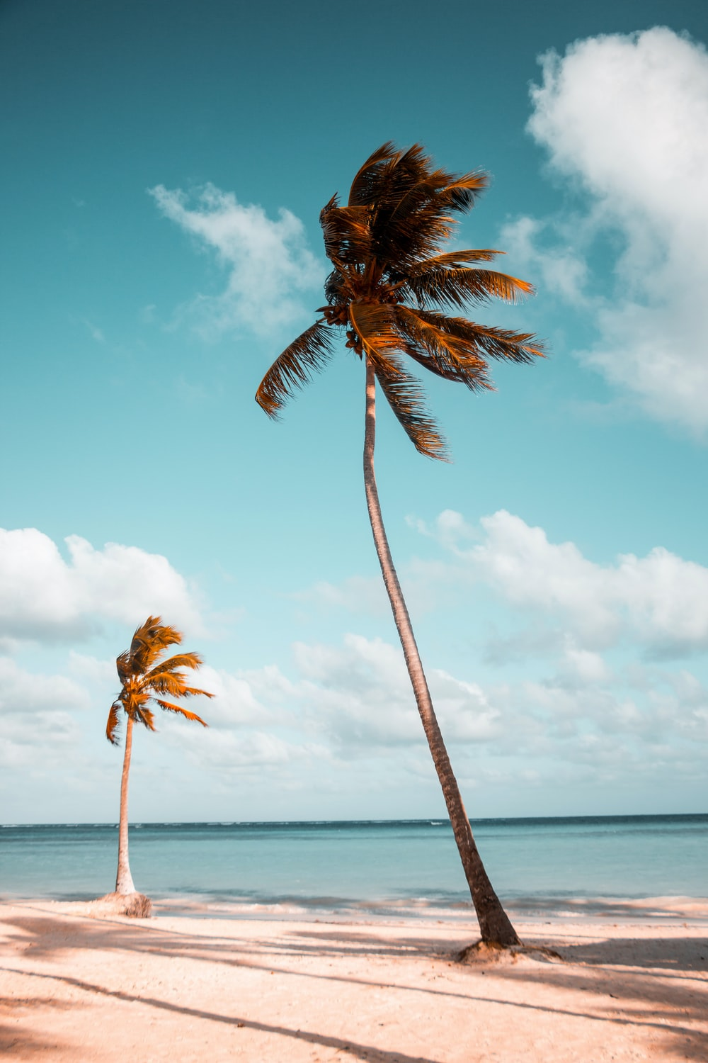 two coconut palm trees near shore under white clouds during daytime