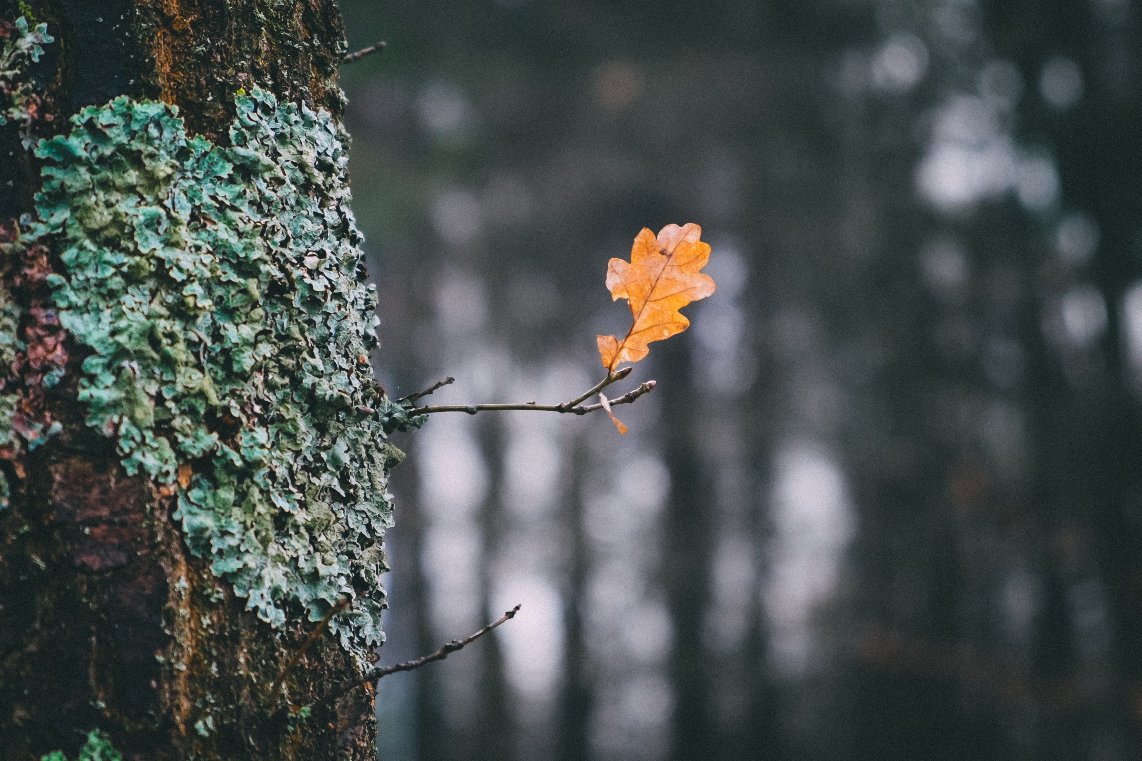 selective focus photography of withered leaf