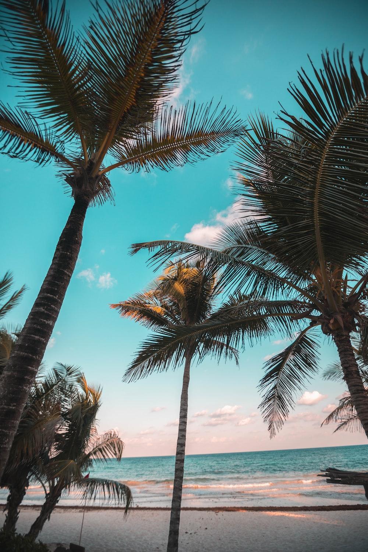 three coconut trees on seashore