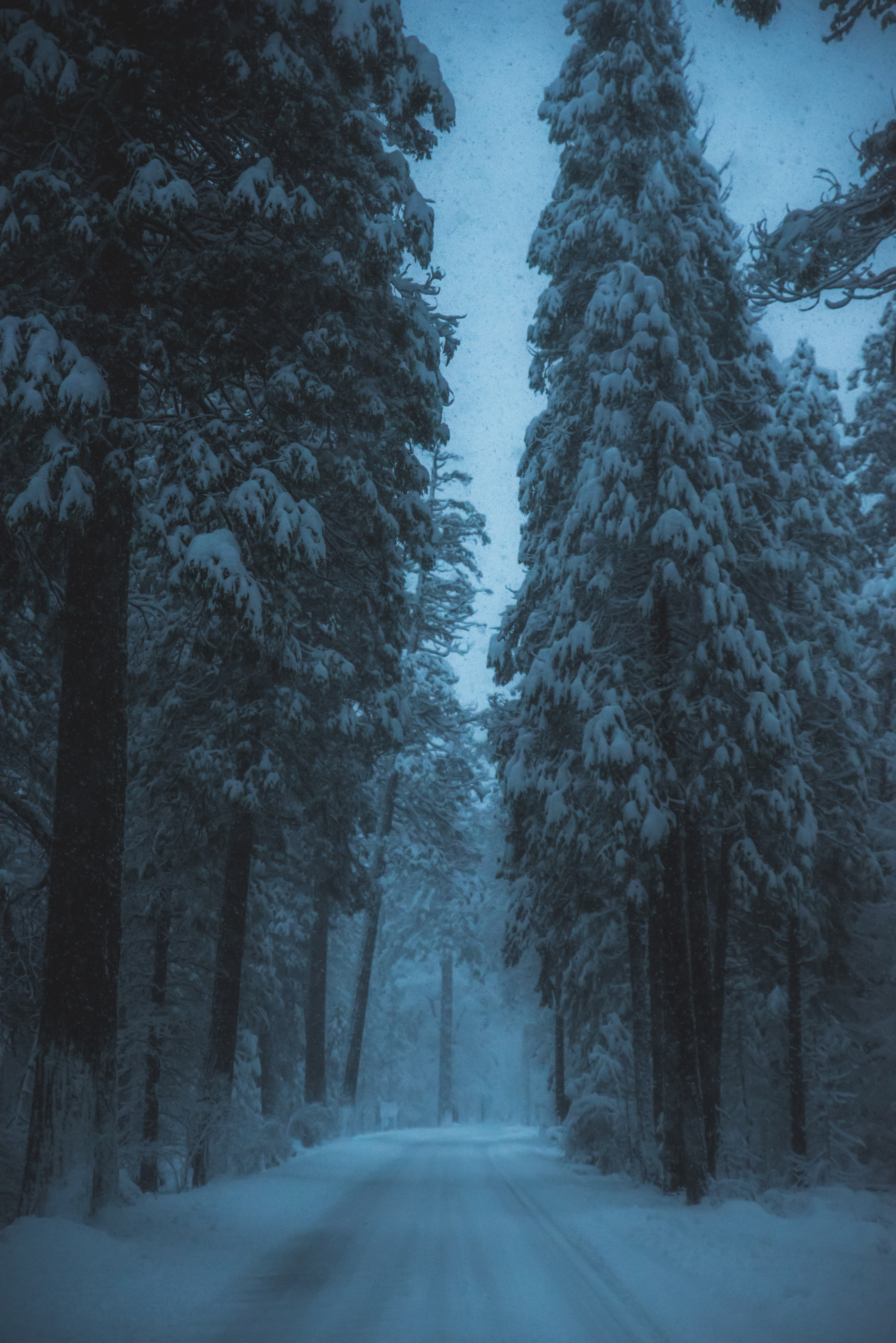 road surrounded by snow covered trees