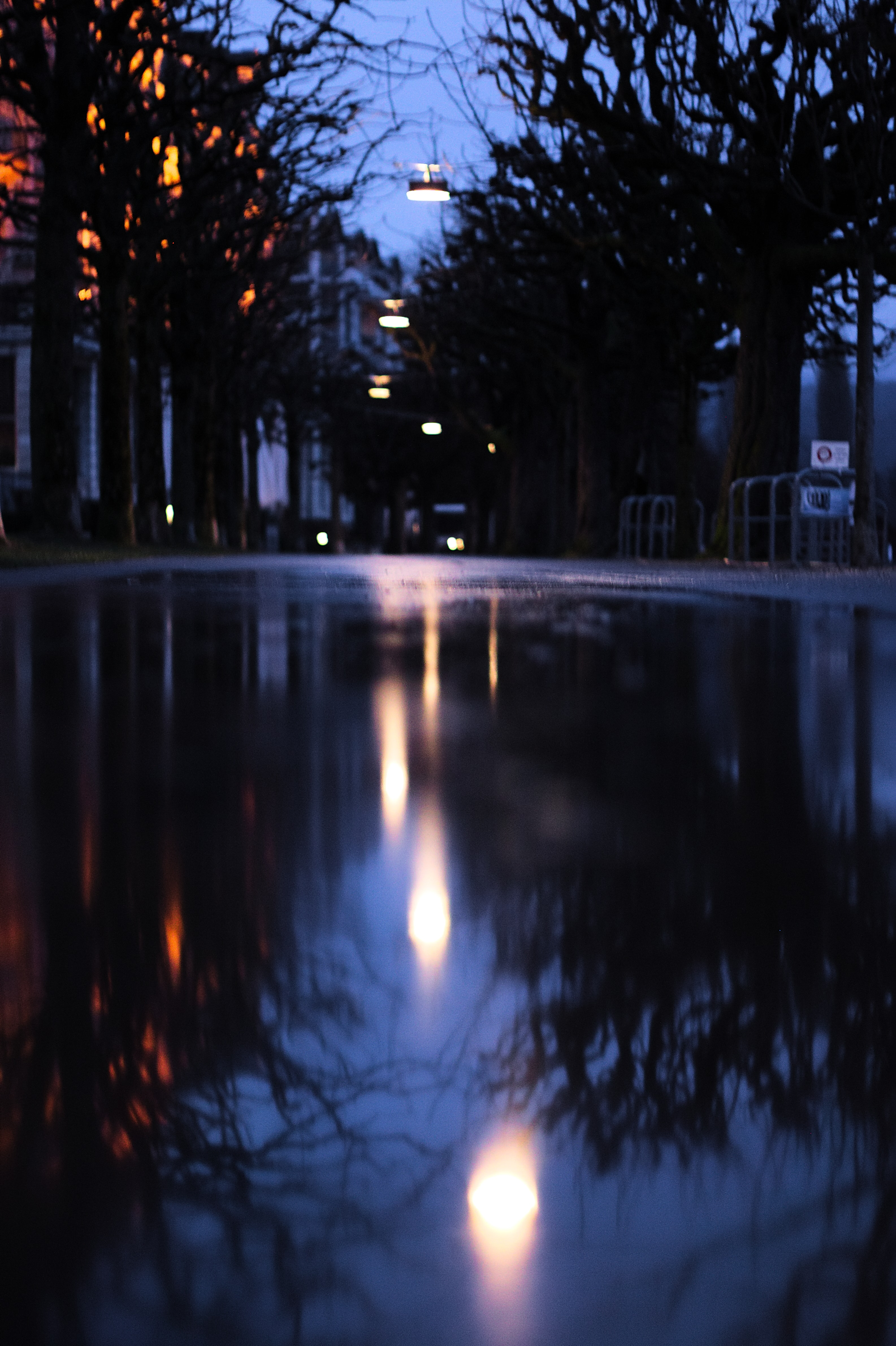 close up photography of street near trees at night time