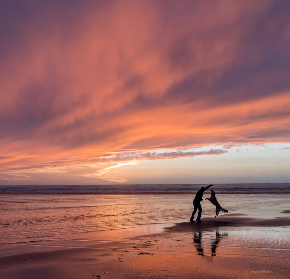 silhouette of a man and golden retriever playing in seashire