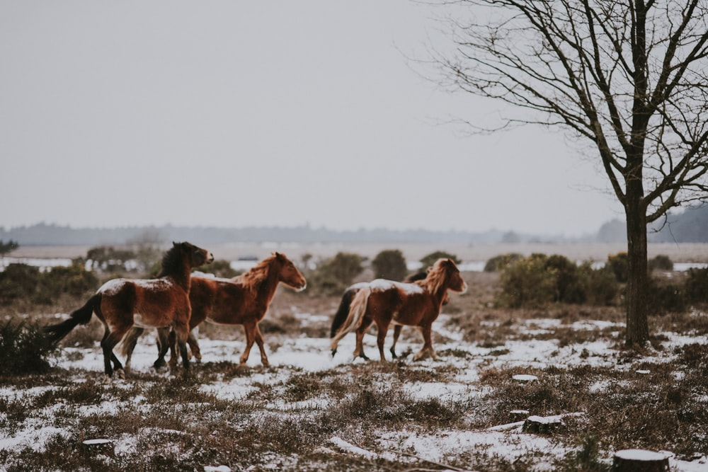 three brown horses near black tree landscape photo