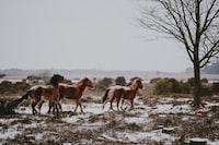 three brown horses near black tree landscape photo