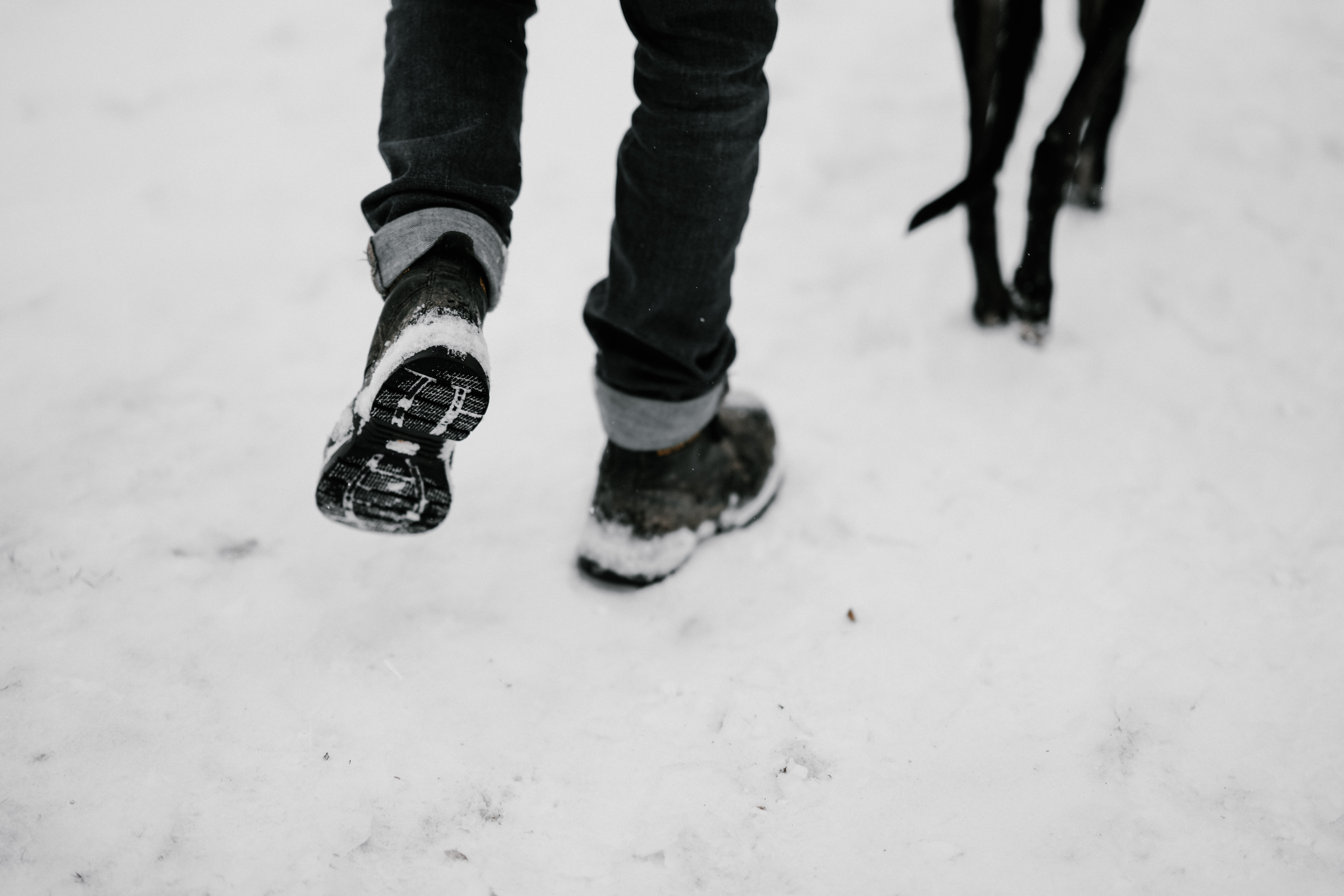 person walking with black dog on snow