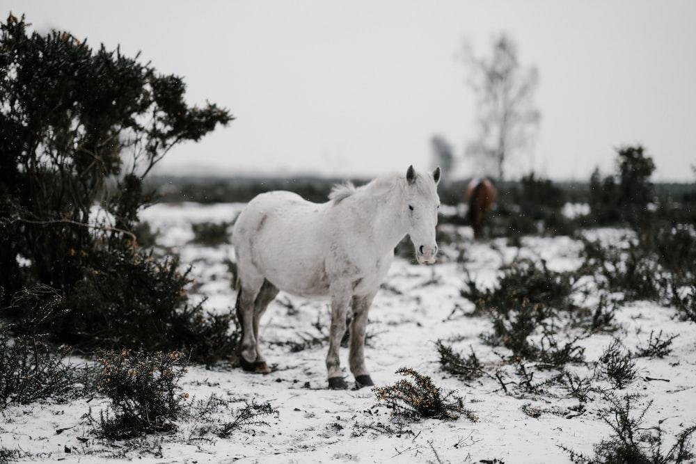 white horse standing on snow-capped flooring