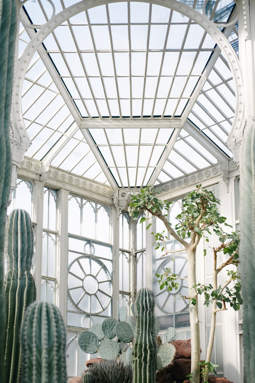 indoor tree and cactus near windowpane