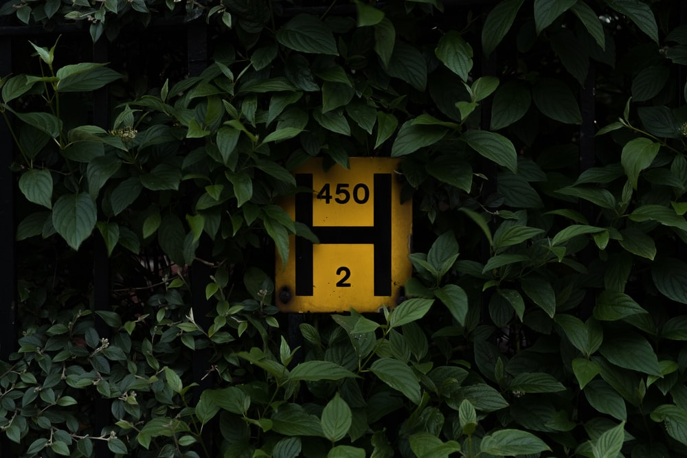 yellow and red H 450 2 signage surrounded by leaves