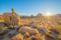 cactus on dry land near boulders under blue sky golden hour photography