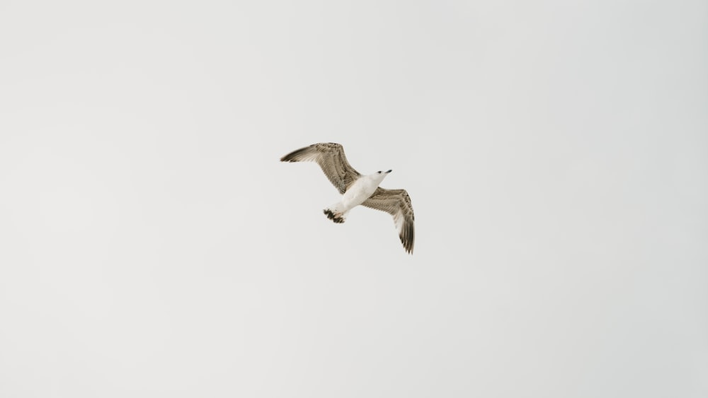 seagull flying during daytime