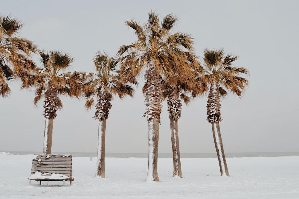 brown bench near palm tree