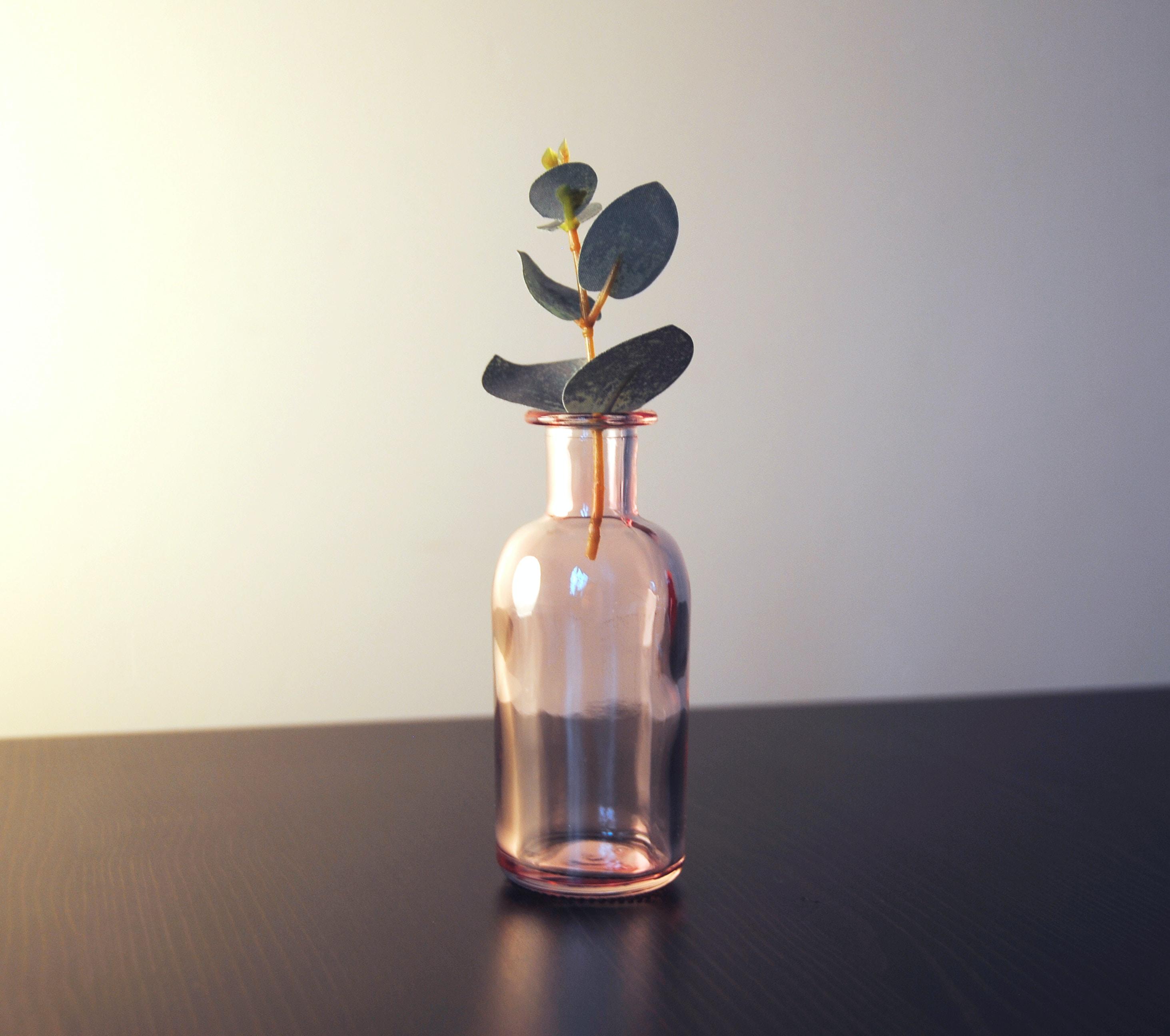 green leaf plant in glass jar