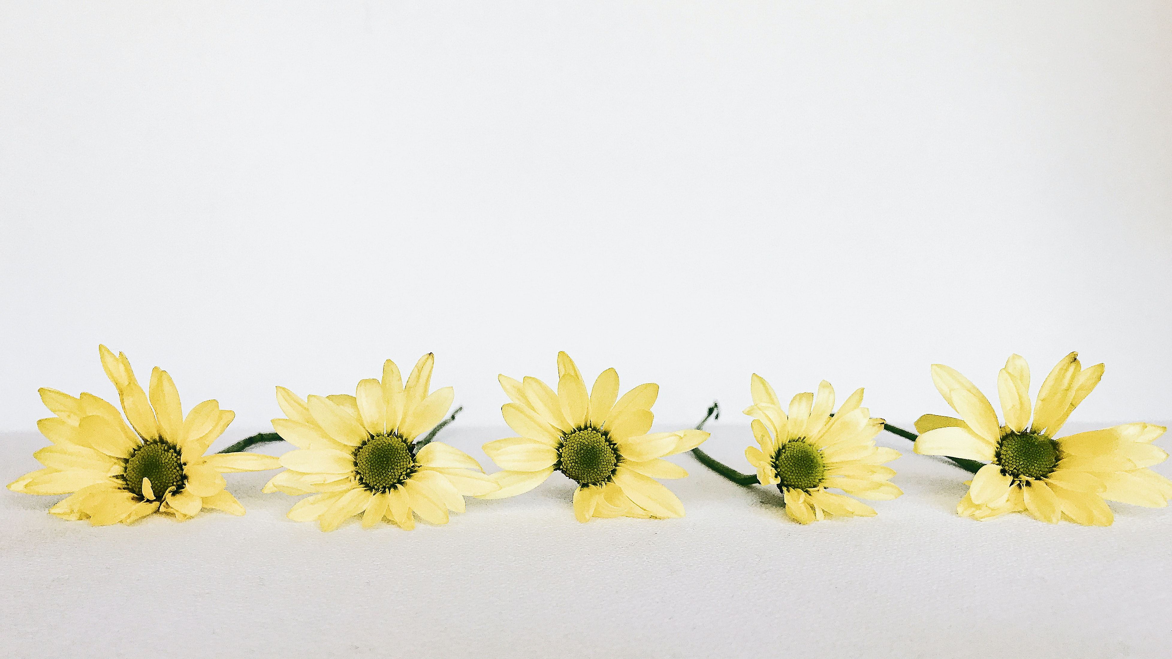 five yellow daisy flowers