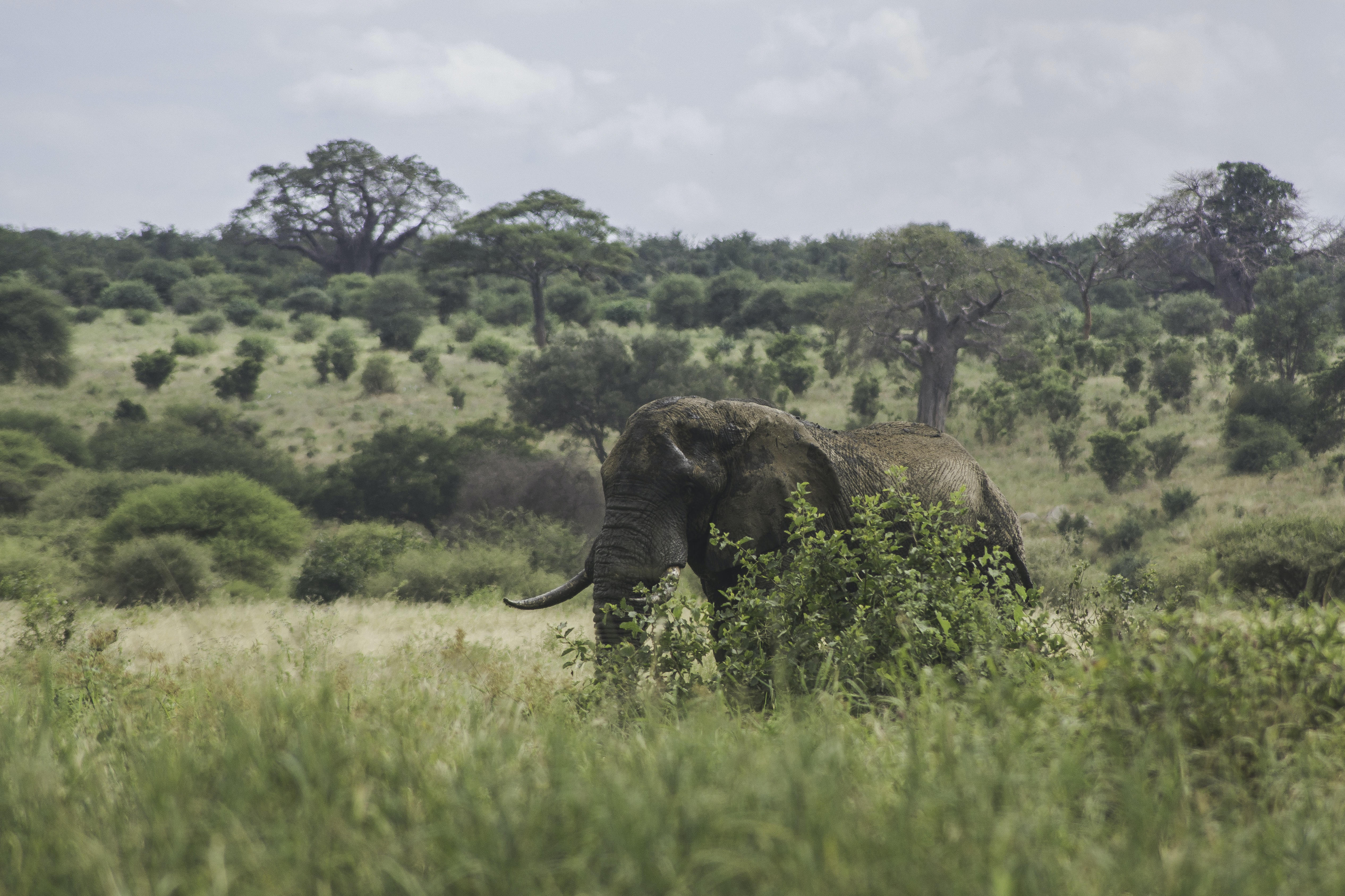 black elephant standing on green grass field under white clouds during daytime