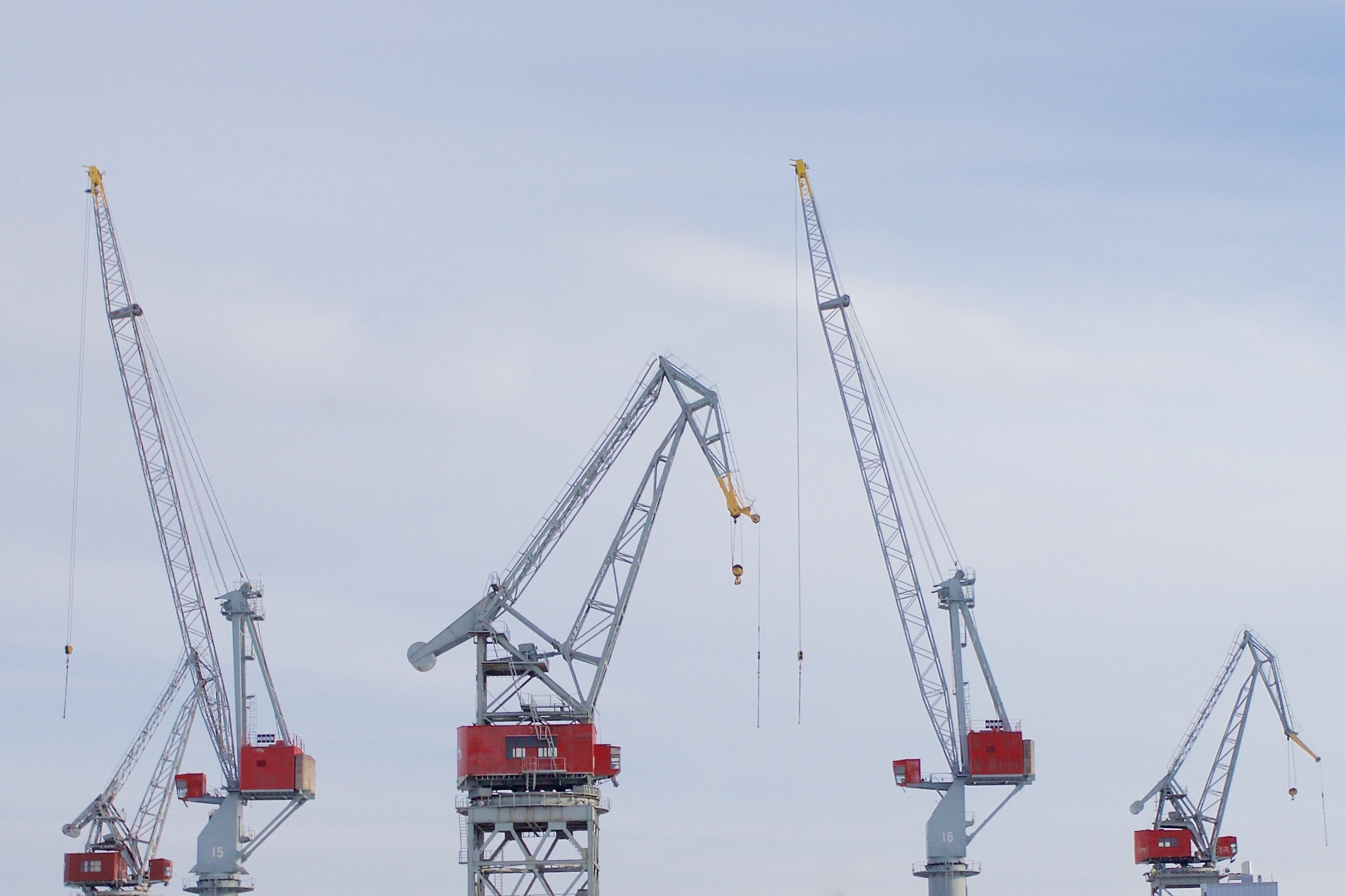 timelapse photography of red crane collage