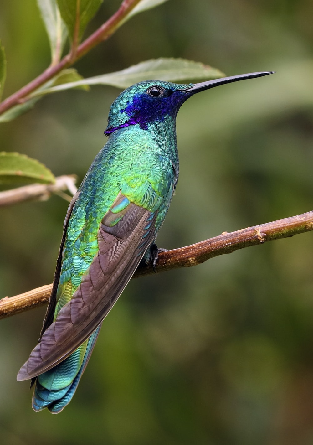 blue and green bird on top of brown branch during daytime