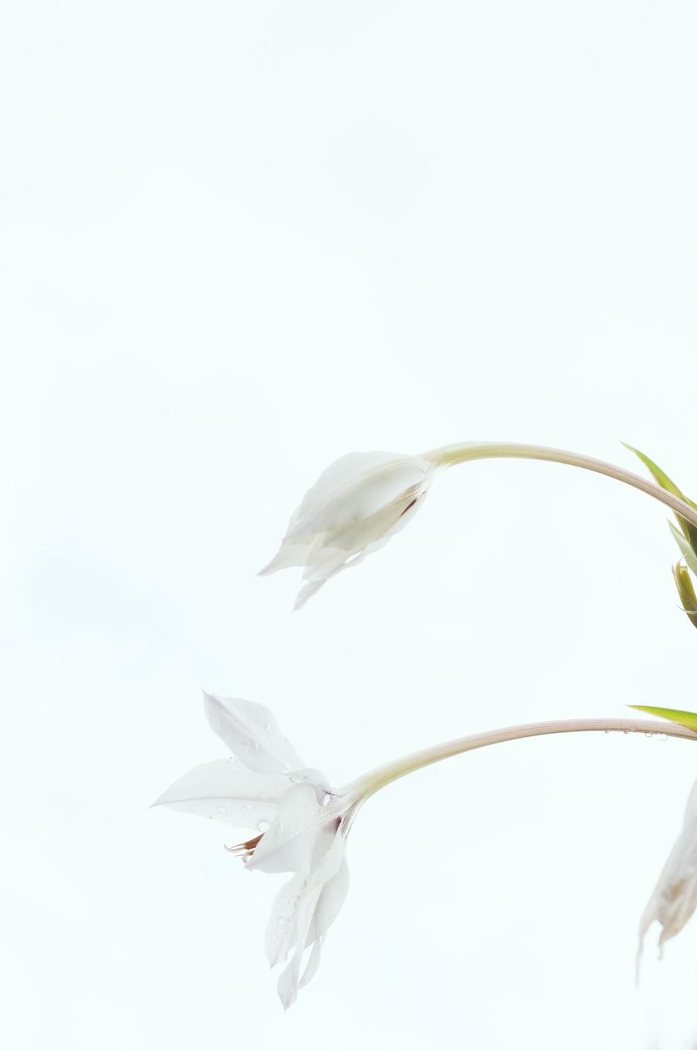 white petal flower on white backgrond