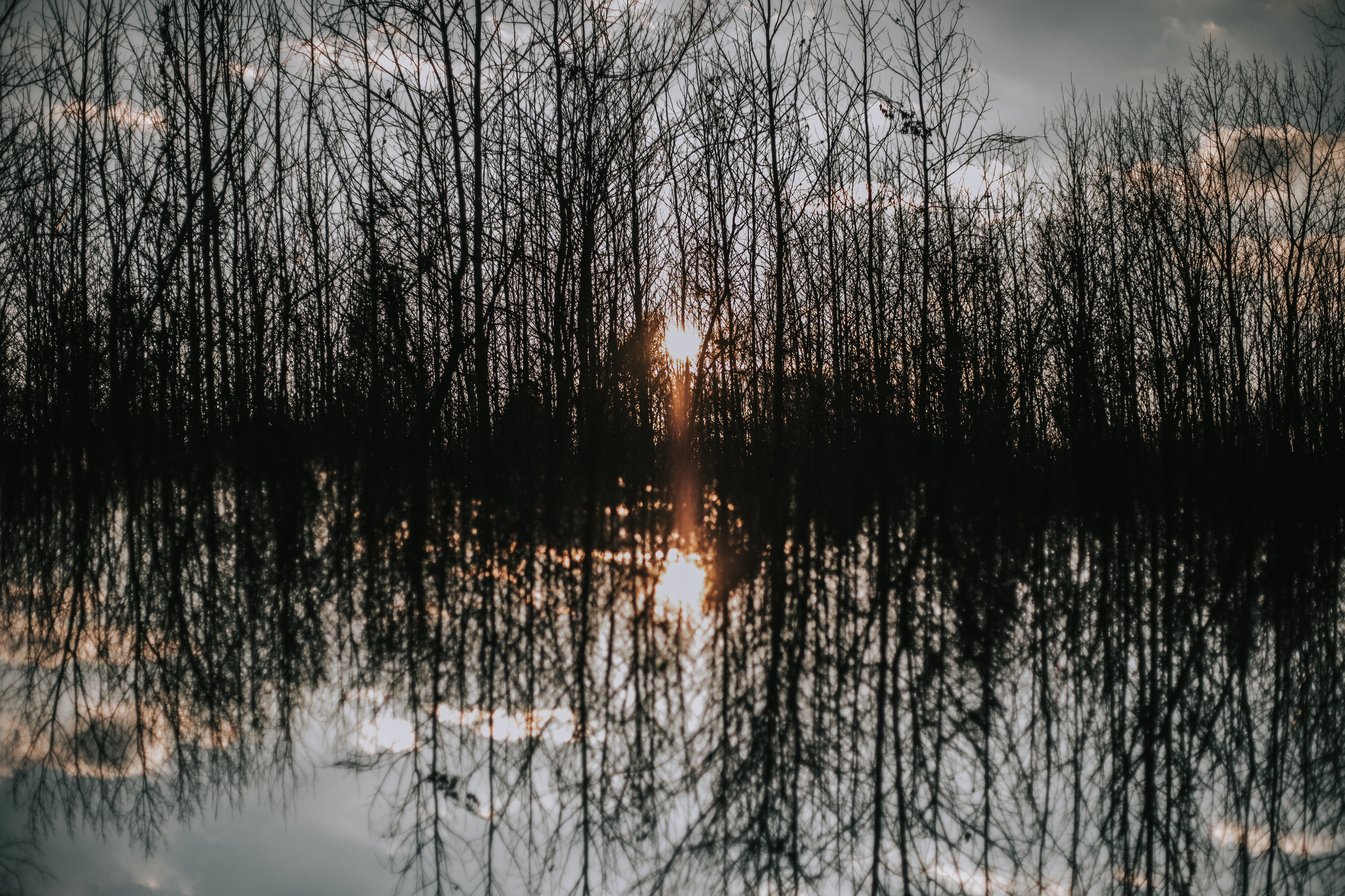 body of water reflecting forest trees