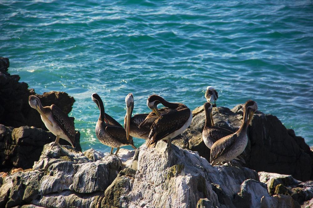 six birds on rock