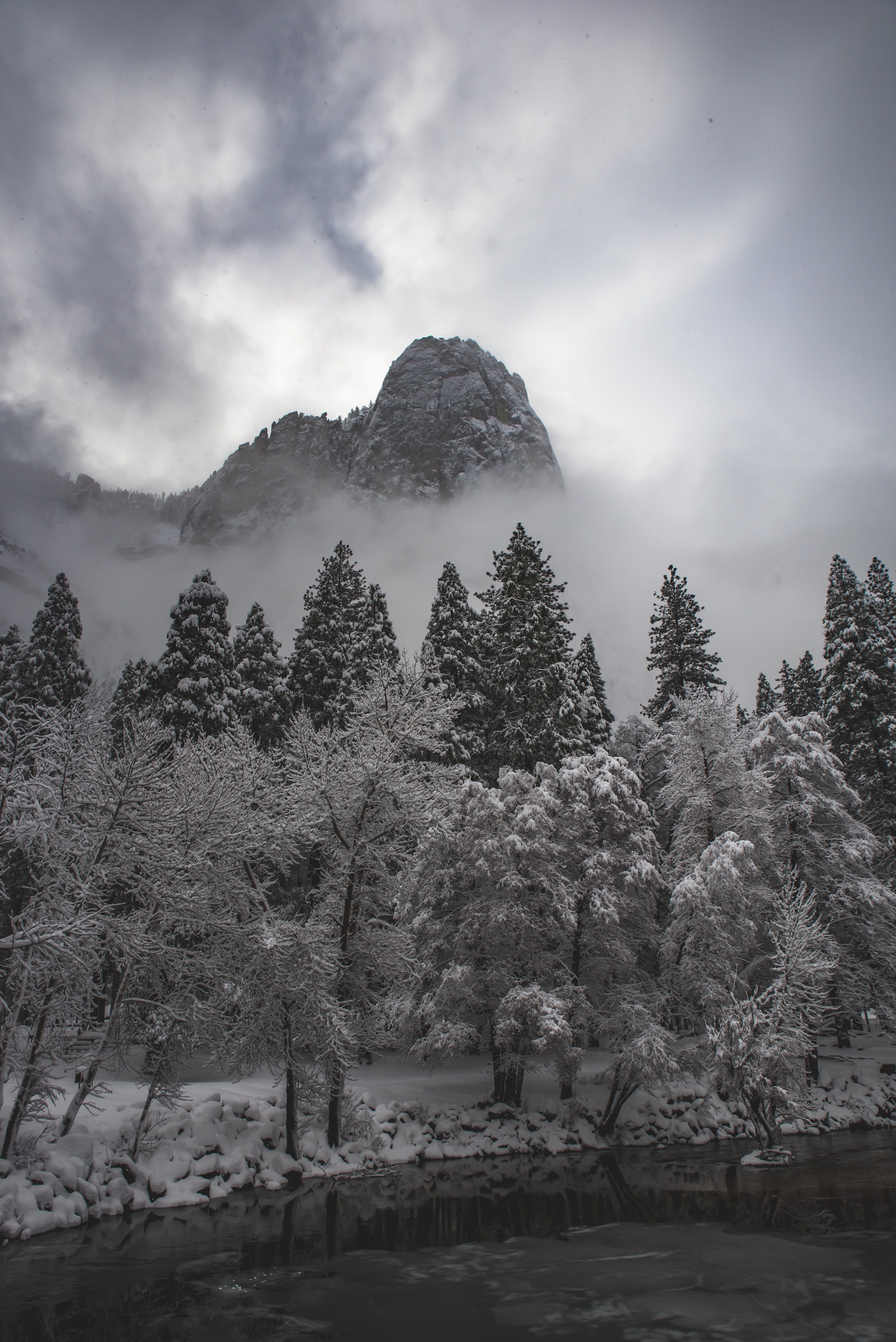 grayscale photography of trees and mountain