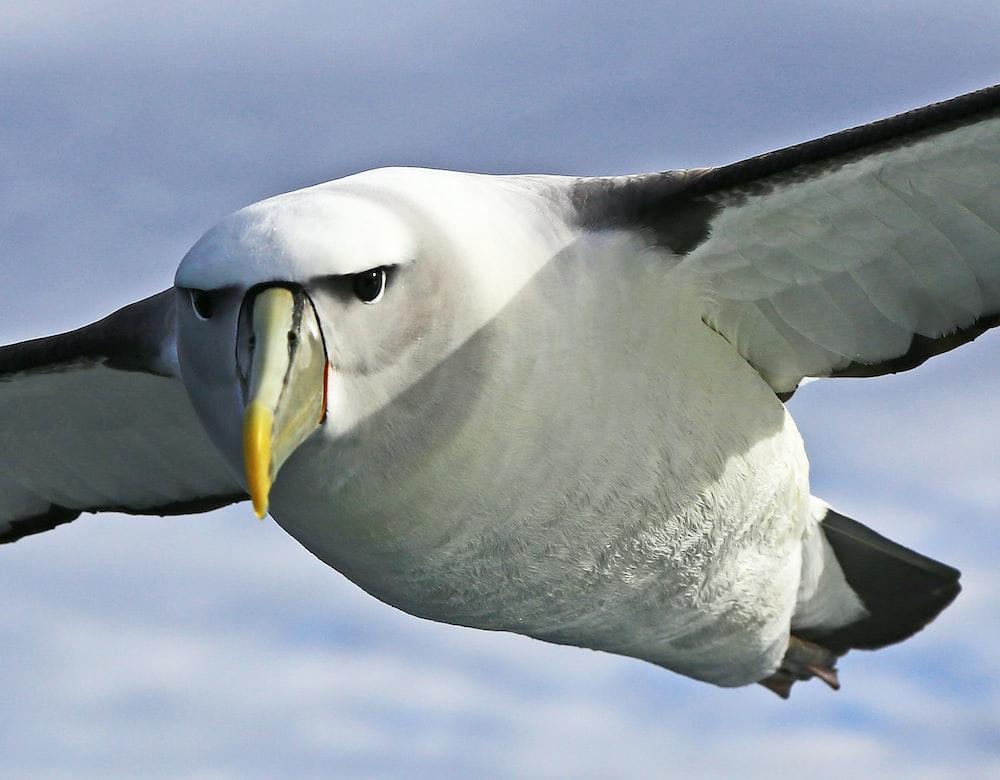 Aves más grandes