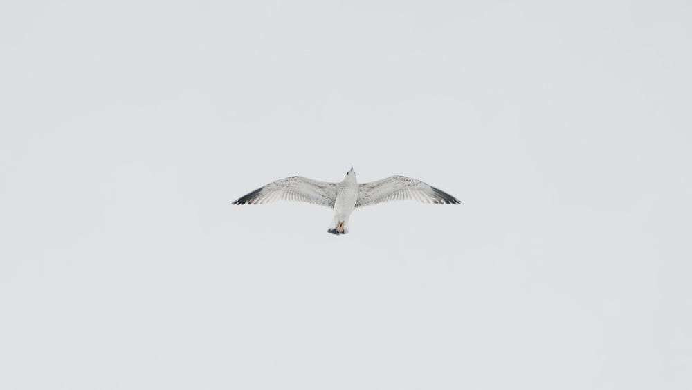 white bird on flight under white sky at daytime