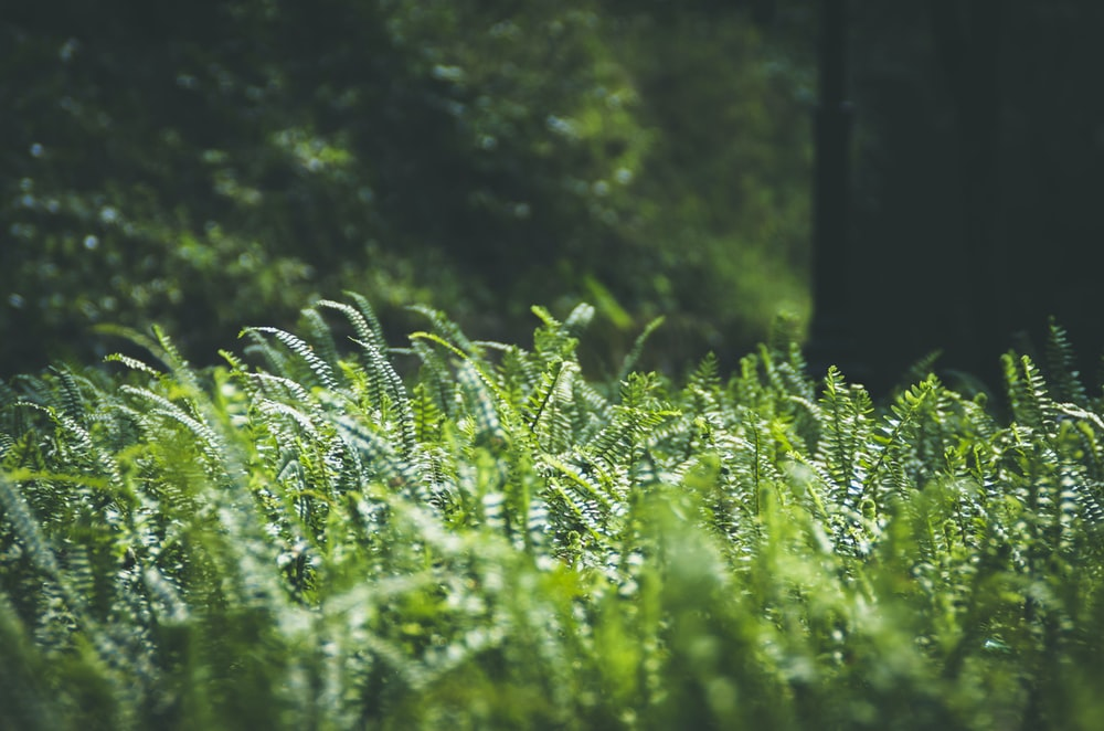 close up photo of green fern plants at daytime