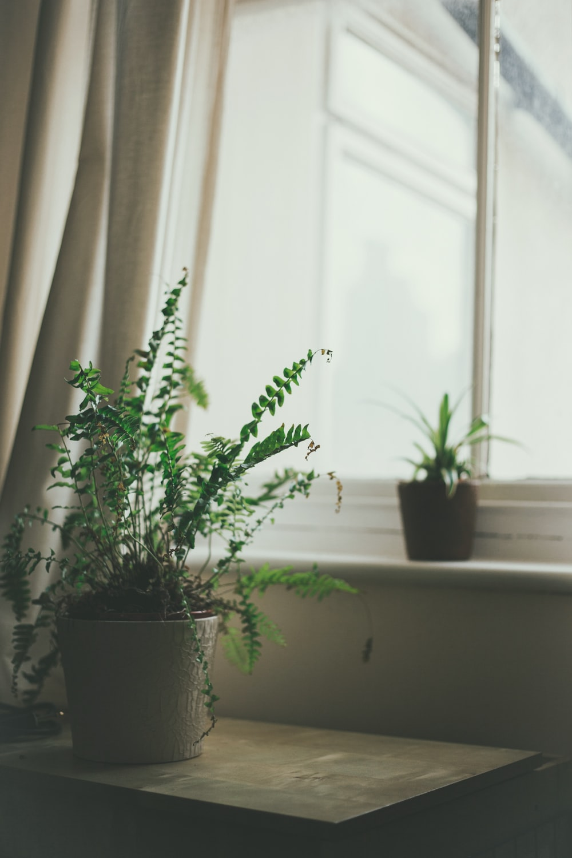 fern plant on the side table near close window